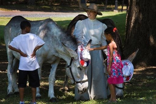 Visit the donkeys!